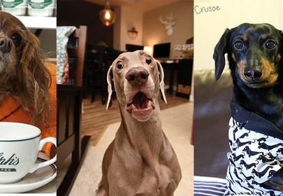 Top 10 Instafamous Dogs to Follow That Pull at Your Heart Strings