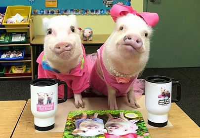 Prissy and Poppleton the MiniPigs Who Will Melt Your Hearts