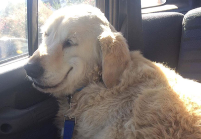 This smiling drugged-out dog makes surgery look like fun