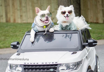 This Stylish Pupper Couple had the Cutest Engagement Photo Shoot of All-time