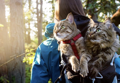 Adventure Cats Bolt and Keel: rescued from a garbage can now climb mountains