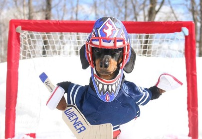 Crusoe the dachshund doesn't let being a sausage stop his pro sports dreams