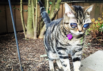 Matilda the Alien Cat who lost her eyes only to find the greatness in people around her