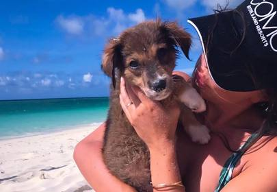 Potcake Place: white sand beaches, tropical waters and puppies