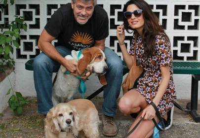 George and Amal Clooney Give $10,000 to Help Rescue Dogs