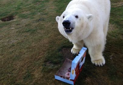 Canadian man has movie star Polar Bear for a pet