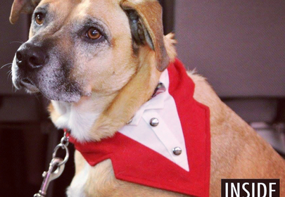 The Bark Ball is the top-dog event of the year