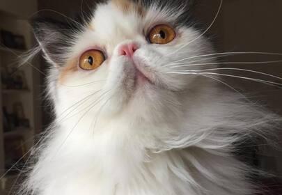 Graveskull the Persian Cat is a Yoga loving masseuse