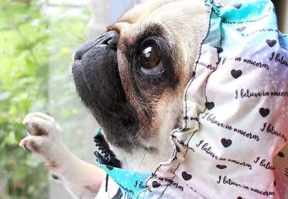 LouLou the Pug will steal your man