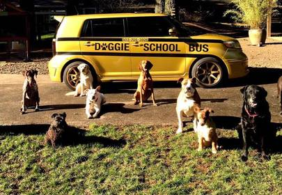 Excited pupper races to Doggy School Bus!