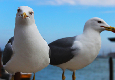 Seagull bandit steals camera, takes it for an aerial joy ride