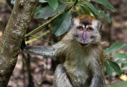 Gang of monkeys terrorize tourists in Indonesia