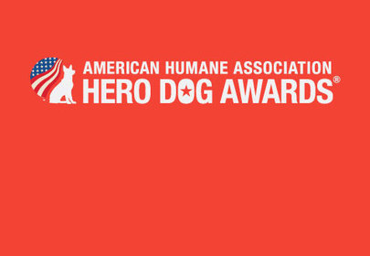 Hero Dog Awards: meet the top 7 finalists