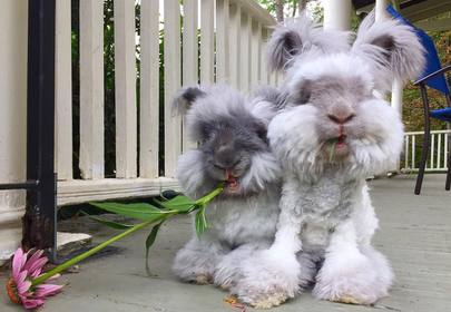 Suki and Otis are the cutest bunnies you will ever see