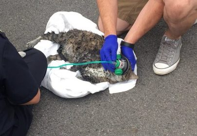 Firefighters rescue 5 cats from burning building