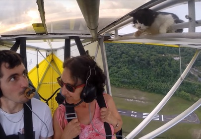 When cats fly: Furry stowaway takes an unexpected flight