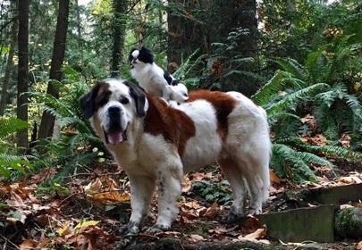 BFF Goals: Big dog loves taking tiny dog everywhere on his back