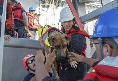 Two dogs and their humans found after months lost at sea