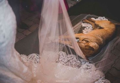 Pup crashes wedding, finds furever family