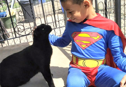 "Superhero ""Catman"" saves stray cat lives daily"