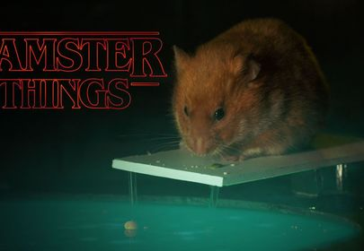 Hamster Things Cuter Than Stranger Things? You Decide