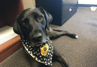 Dog flunks service training three times, finds job comforting those in need