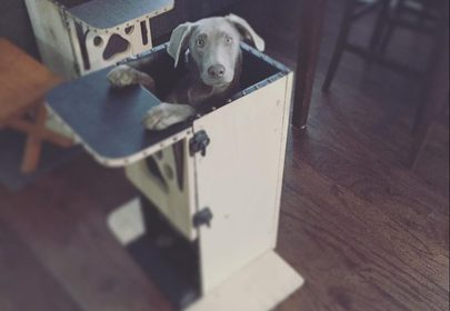 Puppy has own high-chair to combat rare disease