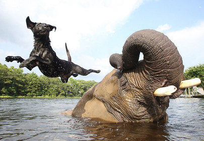 Unlikely Animal Friendship: Bubbles and Bella