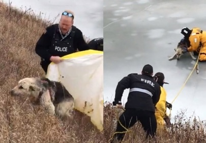 Firefighters rescue dog from frozen river, happy ending for family