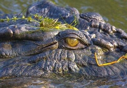 Tiny Dog Chases Off Massive Crocodile in Australia