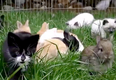 Kittens Hopping Like Bunnies Is The Cutest Thing On The Internet