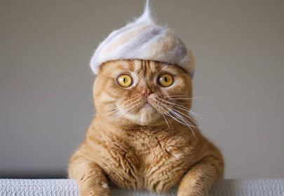 Cats in Hats: Kitty Dad Makes Cat's Hats Using Their Own Fur
