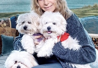 Barbra Streisand cloned her dog, spending up to $500,000