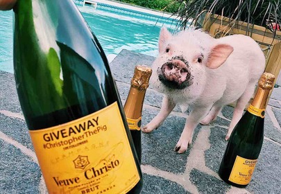 Christopher the Pig puts the Boo in Boujee