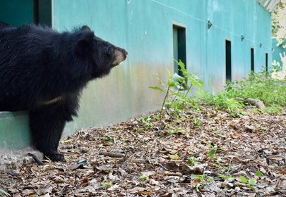 Bear Caged for 15 Years Sees Grass For the First Time