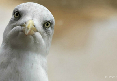 Lifetime Hotel Ban Due To Pepperoni Seagull Debauchery Lifted After 17 Years