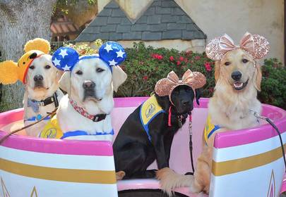 Good Boy Field Trip To Disneyland Made Happiest Place on Earth 100x Happier