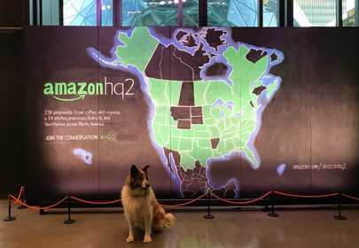 Amazon HQ has 6,000 dogs and they have better office perks than you