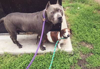 BFF Dogs Tragically Separated After Adoption: Reunited At Last