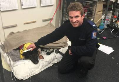 Hero police dog stabbed, saved by another hero police dog with blood donation