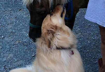 Molly is a Therapy Dog for Abused Horses