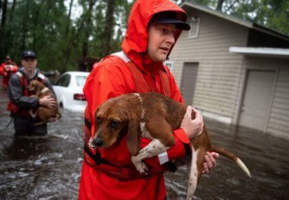 10 Beagles Rescued by Coast Guard from Hurricane Florence
