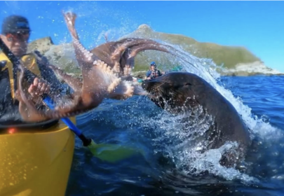 Seal Slaps Kayaker with Octopus & There's a Totally Normal Explanation