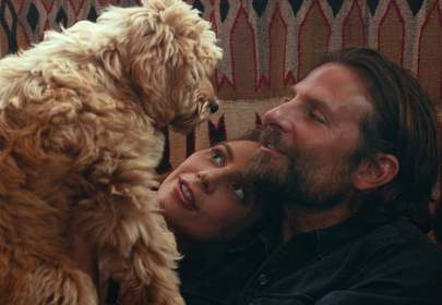 Bradley Cooper Honoured by PETA for Casting His Dog Charlie in A Star is Born