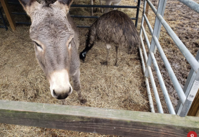 Unlikely Animal Friendship: Jack and Diane, the Donkey-Emu Pair Will Melt Your Heart