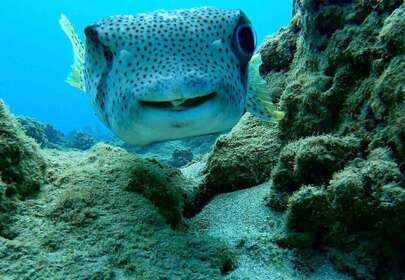 Diver and a Smiley Fish Hang Out Every Day