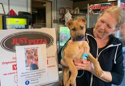 Pizza Restaurant Spread the News of Adoptable Dogs on Their Boxes