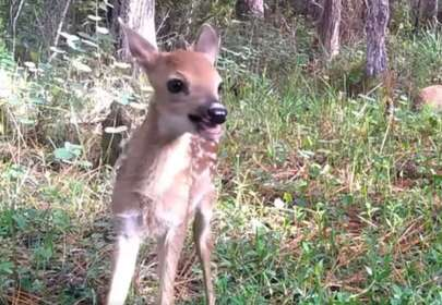 Trail Camera Catches Deer Having the Most Amazing Time (Video)