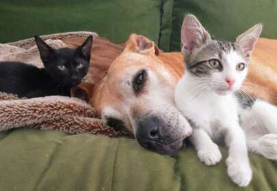 Senior Dog and a Little Girl - Best Friends Through a Glass Door
