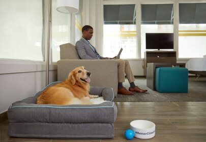 Mars Petcare and Hilton Hotels Team for New Pet-Friendly Hotels